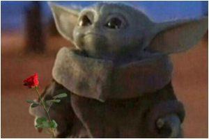 Rose Day 2020: Memes take over social media as Valentine Week begins
