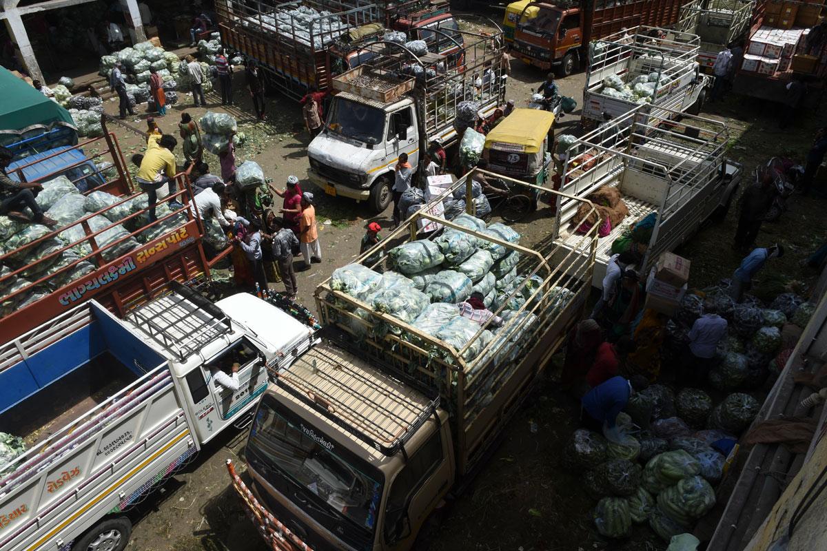 Coron Update, Mother Dairy, Safal, Delhi-NCR