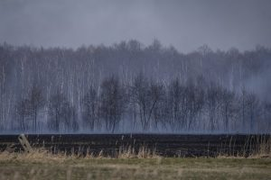 Massive fire destroys 6,000 hectares of Poland's largest nature reserve