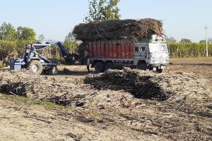Lockdown side-effect: Sugarcane farmers facing crunch in absence of buyers