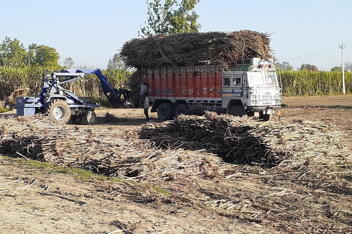 Lockdown, Sugarcane farmers, Meerut, sugarcane, Coronavirus, Hapur, Ghaziabad, Noida, Lucknow