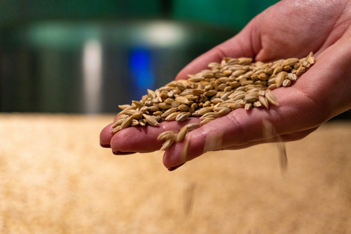 MSP of wheat hiked '50 per quintal - The Statesman