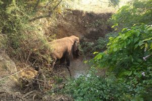 Andhra Pradesh Forest Department rescues elephant from 15 feet deep ditch