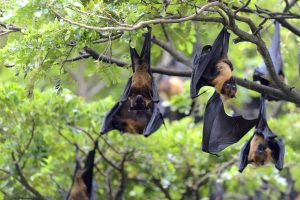 Alarm in Gorakhpur after bats drop dead