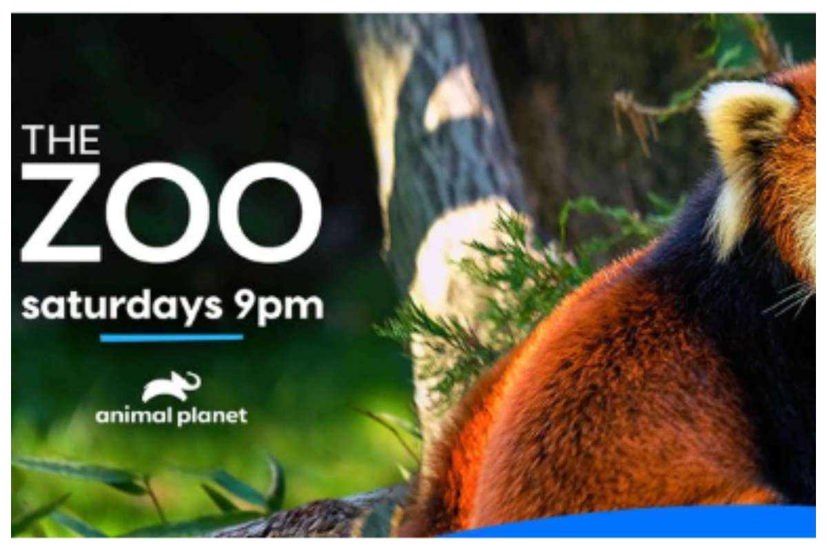 Animal Planet, The Zoo: COVID-19 And Animals, Documentary