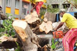30-35 trees uprooted, enclosures damaged in Zoo