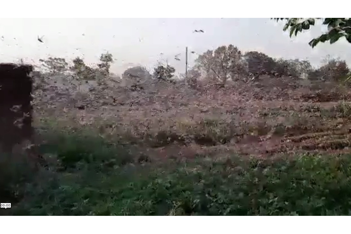 Yogi Adityanath, government, Uttar Pradesh, Locust attack