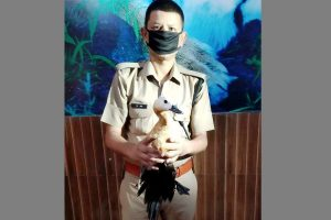 Speculations over lone Brahminy Duck at Asan conservation reserve