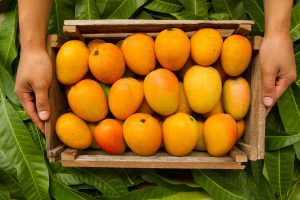 Post-Covid demand dip lands Malda mango traders in a fix