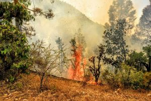 Social media creates wild fire in hills, Uttarakhand govt launches campaign
