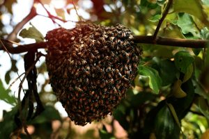 Sweet revolution adversely affected in Bihar as honey bees go 'jobless' too