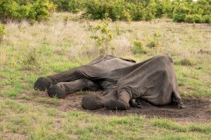 Death of 90-year-old jumbo