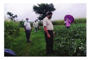 A'duar rainfall stops harvest, farmers hit