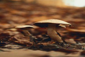 Hepatotoxic 'Death Cap' mushrooms behind death of six in Meghalaya's West Jaintia Hills