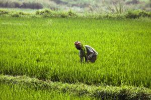 Siliguri FCI depot set to send 14000 MT rice to Bhutan