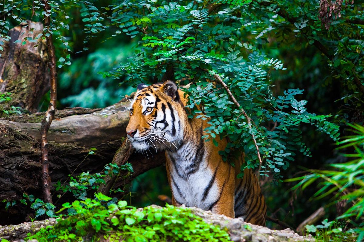 Sunderbans Tiger Reserve