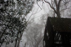 Rajasthan: Migrant labourer quarantines self on tree after residents did not let him enter village
