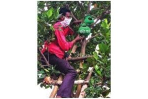 Post Amphan: Nature lovers hang artificial nests for birds