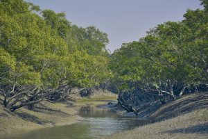 Mangrove acted as natural barrier to cyclone Amphan in Odisha
