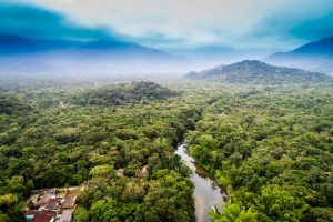 Corona & the Rainforest