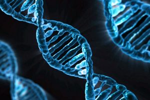 Researchers to identify genes that put some at severe corona risk