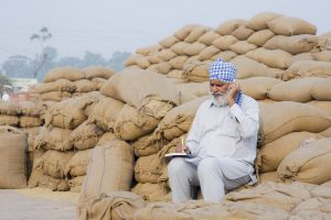 Paddy transplantation rates double up due to flight of migrants from Punjab: SAD