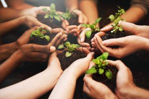 MAKAUT plants 40,000 saplings