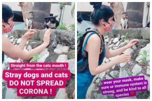 Adah Sharma's important message while feeding stray animals