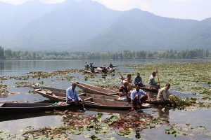 Manual de-weeding of iconic Dal Lake might be uphill task in restoring pristine glory of waterbody