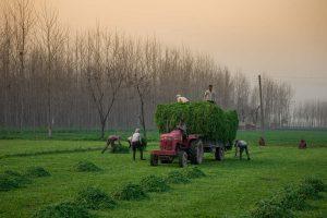 Let's reduce farm imbalances