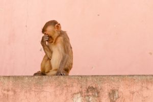 Monkey beaten, hung to death from tree in Telangana