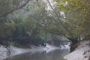 Alliance Francaise du Bengale holds web seminar on Sunderbans conservation