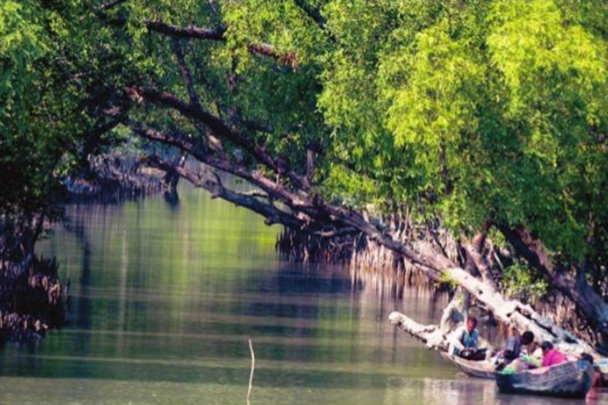 Sundarbans, Bangladesh, Cyclone Amphan, State Forest Department