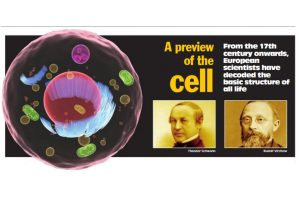 A preview of the cell
