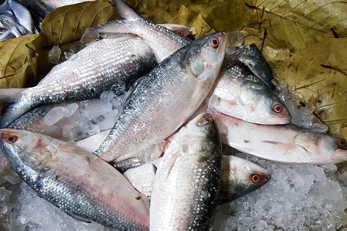 fish markets, hilsa, Bangladesh,