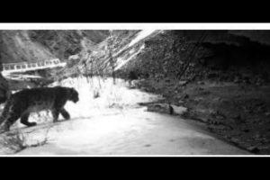Uttarakhand to set up snow leopard conservation centre in Uttarkashi