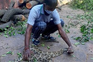 7-foot python rescued from Taj Mahal premises