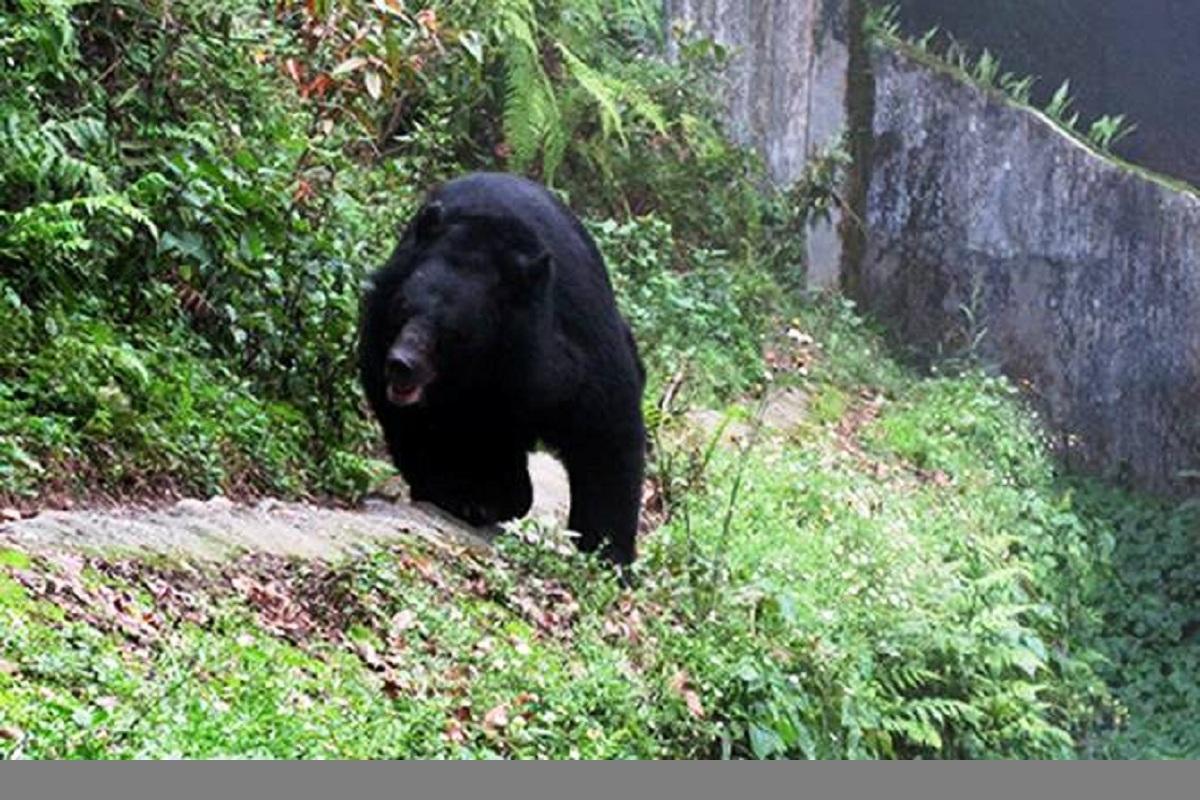 Darjeeling zoo, Darjeeling, Padmaja Naidu Himalayan Zoological Park, PNHZP, Kolkata