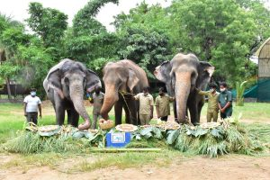 Special celebrations for elephants at Hyderabad Zoo including 82-year-old Rani