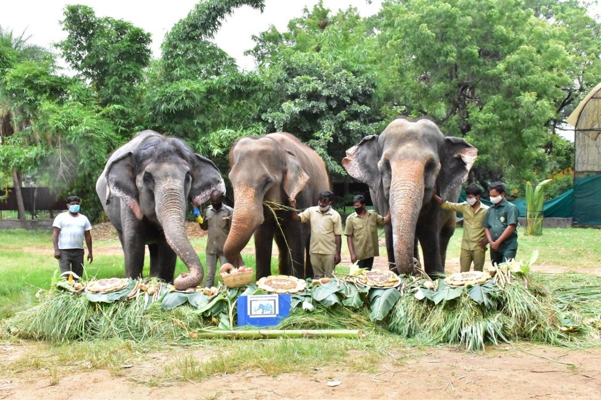 elephants, Hyderabad Zoo, Hyderabad, Rani, World Elephant Day, Nehru Zoological Park