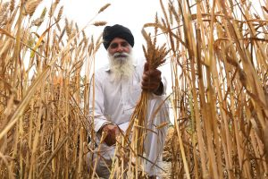 Retail inflation for farm, rural workers drops in July