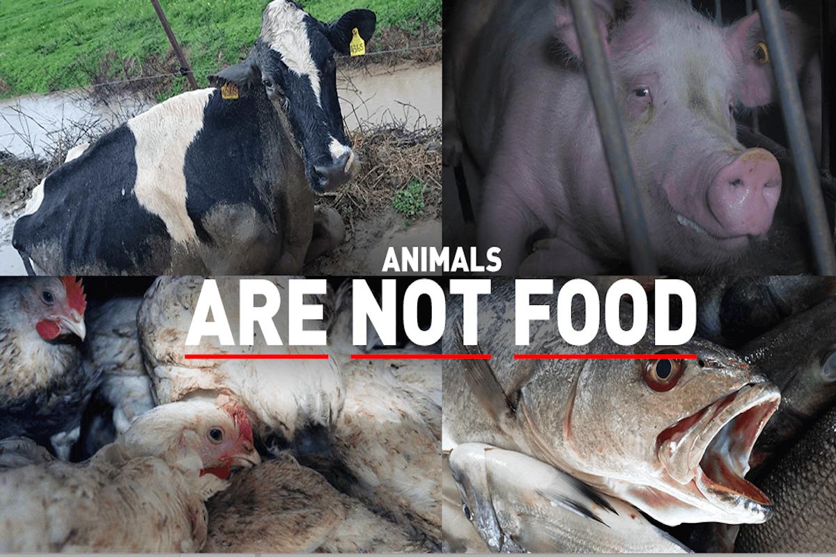 PETA, Animals, Slaughter house, Gandhi Jayanti