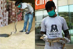 3-ft long monitor lizard, 5-ft long cobra rescued in Agra