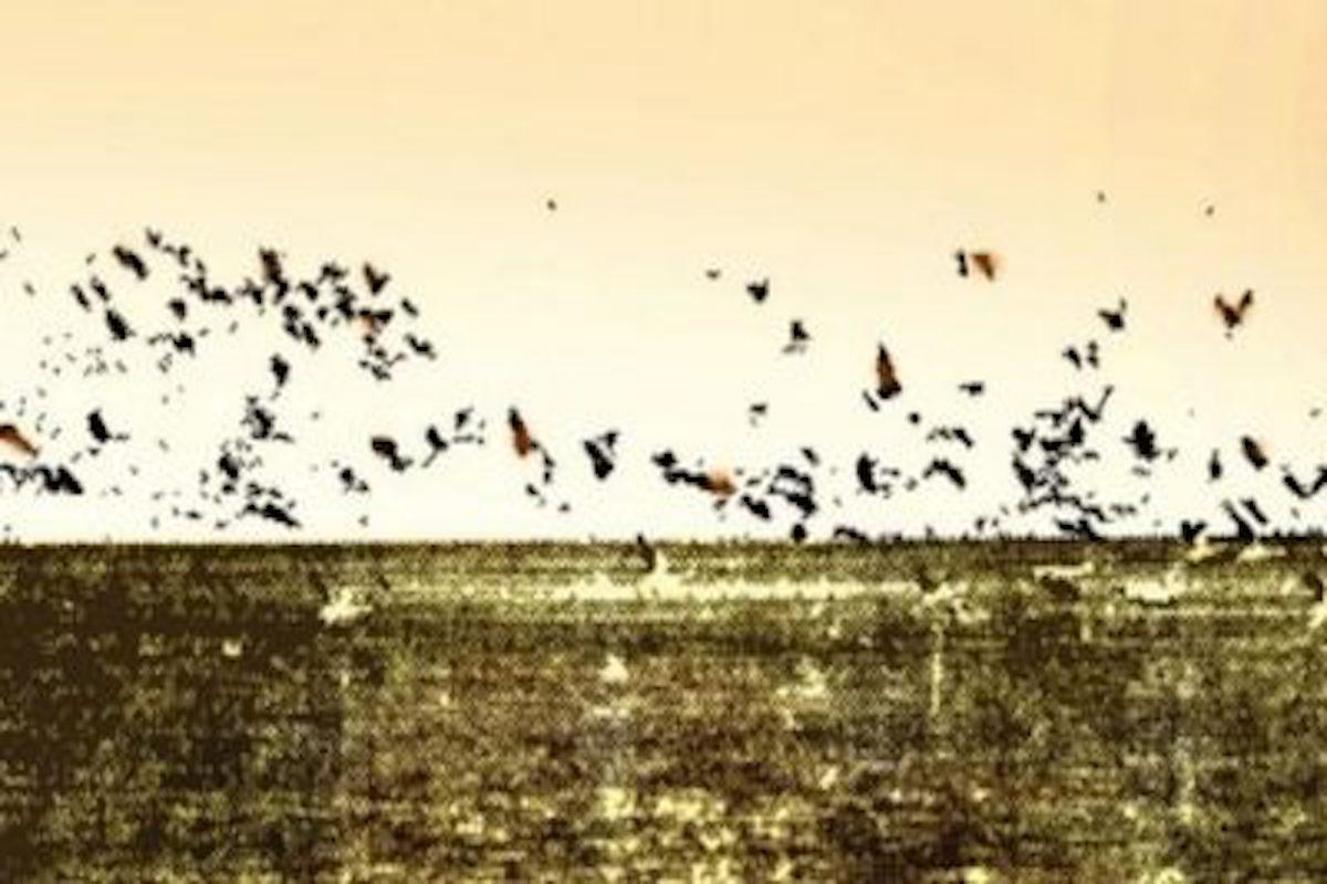 Manas sanctuary, Ducks, Birds, Lake, River, Manas sanctuary birds