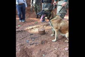 ITBP dog 'Sophia' foils IED blast in Chhattisgarh, saves lives