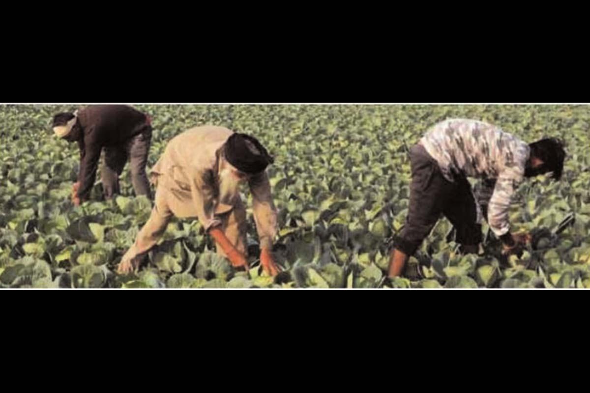 agriculture sector, Parliament, Bills, APMC, Mandi, e-NAM portal