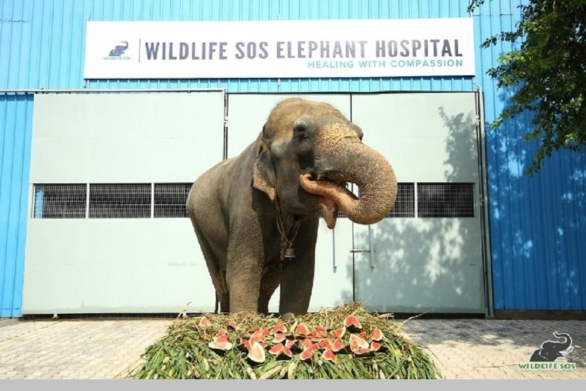 Blind elephant, elephant, Arya, Uttar Pradesh, Wildlife SOS
