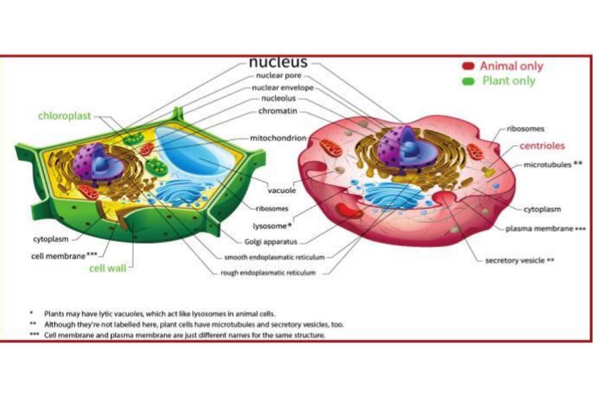DNA, RNA, Science,