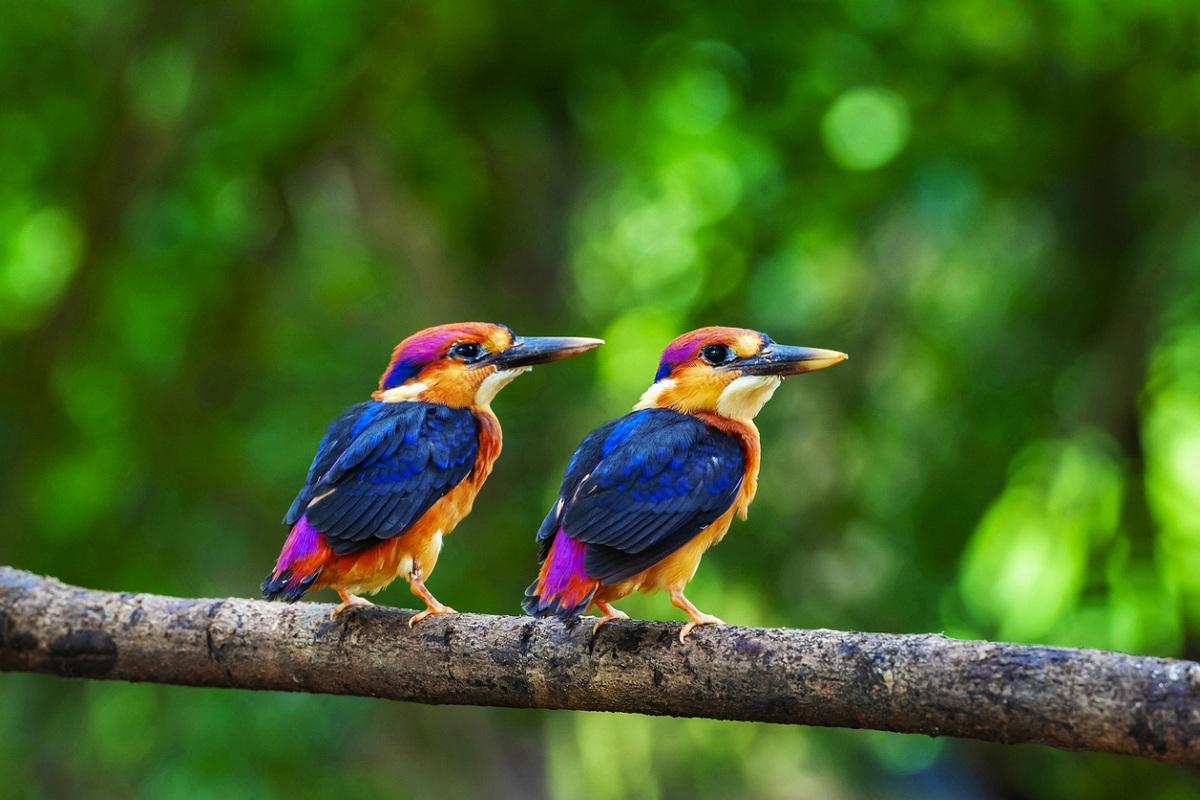 Mahananda Sanctuary, bird festival, Sukna, Latpanchar, Buxa Tiger Reserve