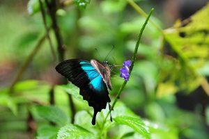 Butterflies take to wings in Bengaluru park on Rajyotsava